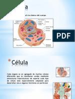 1. La Célula pdf