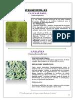 plantas-huancavelica