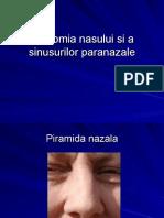246491798 Anatomia Nasului Si a Sinusurilor Paranazale