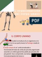 L'organizzazione del corpo umano.pptx