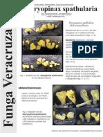 FUNGA VERACRUZANA Num.71 Dacryopinax spathularia