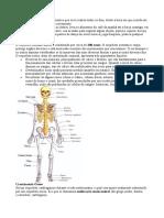 Sistema Esqueletico1