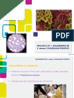 S. aureus coagulasa positivo.pdf