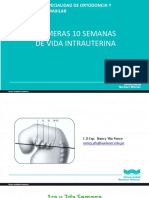 Primeras 10 Semanas de Vida Intrauterina Clase 2