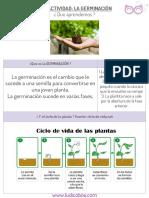 germinación.pdf
