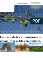 Olivos Minoritarios