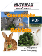 Caecotrophy in Rabbits