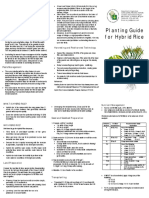 Planting Guide for Hybrid Rice