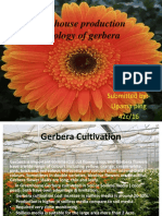 Green-house Production Technology of Gerbera
