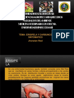 Erisipelaenporcinos 141103115505 Conversion Gate02 Convertido