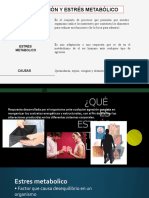 138427680 Huesos de La Cara PDF