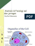 Fisiologi 1b (Fisiologi Sel Dan Jaringan)