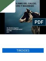 9 Endocrino 3 CA p Tiroides 2019