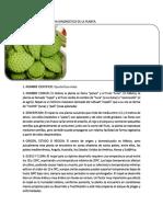 Ficha Diagnostica de La Planta.de Nopal. (1)