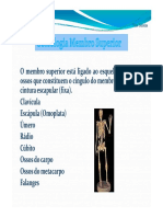Osteologia Membros