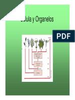 2. Celula y Organelos -Parte 2