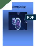 3._Funciones_Celulares