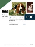 Perro Triste - Buscar Con Google
