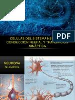 Células Del Sistema Nervioso. Conducción Neural - Leandro Magnotti