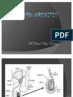 Epididymo-orchitis