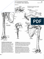 Anatomia - Para Colorear - Kapit y Elson_43