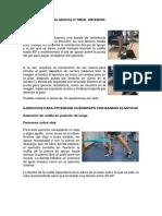 Ejercicios Para El Músculo Tibial Anterior