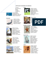 148621982 Clasificacion Taxonomica de Animales