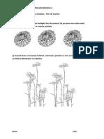 Flori-de-toamnă.pdf