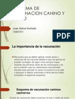 Esquema de Vacunacion Canino y Felino