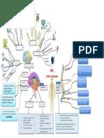 Snc Partes y Funciones Mapa Mental