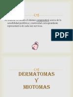 238371234-Dermatomas-y-Miotomas.ppt