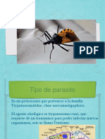 Copia de Copia de Trypanosoma