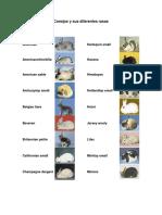 conejosysusdiferentesrasas-120616110536-phpapp02