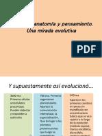 Cerebro Anatomía Evolución