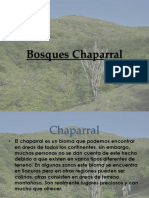 Bosques Chaparral