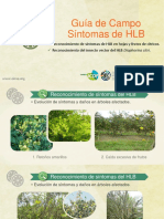 Guía de Síntomas HLB