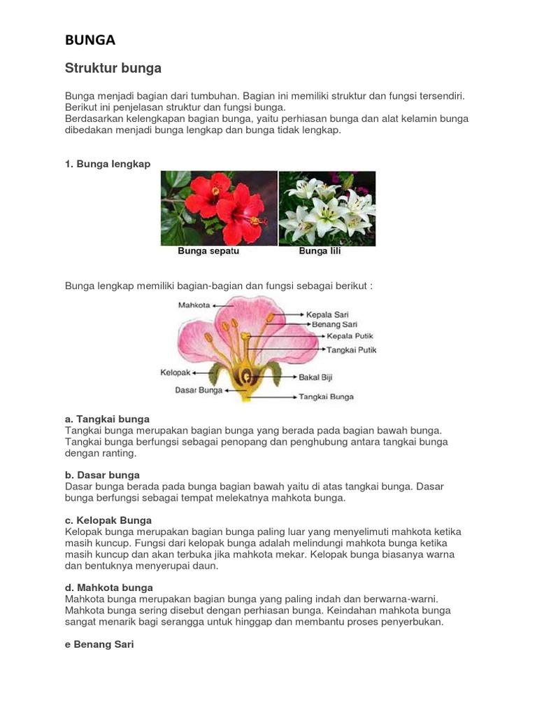 Paling Bagus 11 Gambar Bunga Sepatu Dan Penjelasannya Gambar Bunga Indah