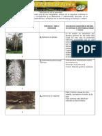 Informe Unidad 2 Limpieza Del Terreno