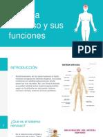 Sistema Nervioso y Sus Funciones