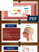 Presentación aparato digestivo