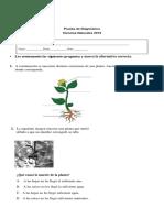 Ciencias Naturales 3Basico Diagnostico (1) (2)