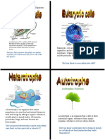zayne ginsburg-characteristics of organisms