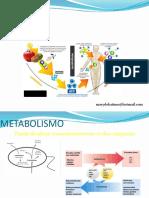 11 Introduccion Al Metabolismo