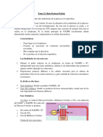 Tema 13 Ruta Pentosa-Fosfato
