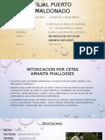 Amanita PDF