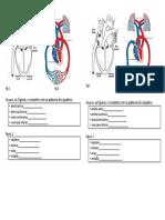 Parte 2 s Circulatorio Teste Fig 1 Fig 2