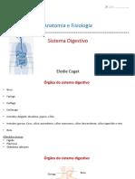 18 Sistema Digestivo