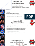 Slide Sitema Respiratorio