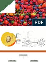 Fisiología y Desarrollo Del Fruto