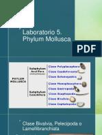 Lab 5. Phylum Mollusca.pdf